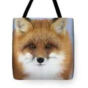 Red Fox Staring At The Camerachurchill Tote Bag
