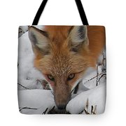 Red Fox Upclose Tote Bag