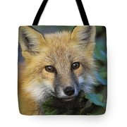 Red Fox Vulpes Vulpes, Gros Morne Tote Bag