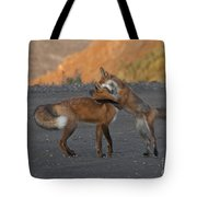 Red Foxes Tote Bag