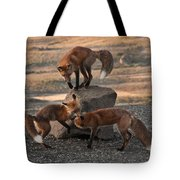 Red Foxes Vulpes Fulva Tote Bag