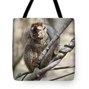 Red-fronted Lemur  Eulemur Rufifrons Tote Bag
