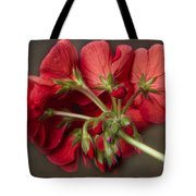 Red Geranium In Progress Tote Bag