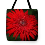 Red Gerbera Daisy Delight Tote Bag