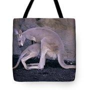 Red Kangaroo. Australia Tote Bag