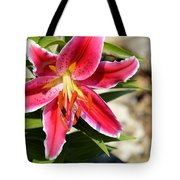 Red Lilly 8095 Tote Bag