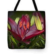Red Lily 6 Tote Bag