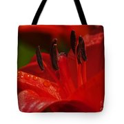 Red Lily Close Tote Bag