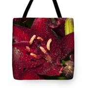 Red Lily Raindrops Tote Bag