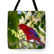 Red Lory Tote Bag