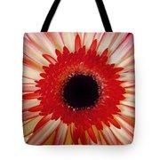 Red  Macro Daisy  Tote Bag