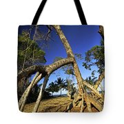 Red Mangrove Aerial Roots Tote Bag