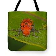 Red Milkweed Beetle Tote Bag