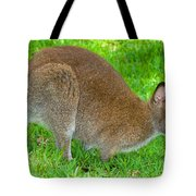 Red Necked Wallaby Tote Bag