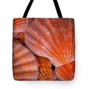 Red Orange Sea Shells Tote Bag