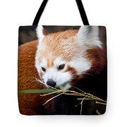 Red Panda  Ailurus Fulgens In Captivity Tote Bag