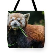 Red Panda With An Attitude Tote Bag