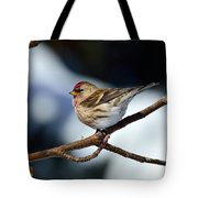 Red Poll Tote Bag