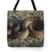 Red Rattlesnake Baja California Mexico Tote Bag