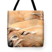 Red River Hogs Potamochoerus Porcus Tote Bag