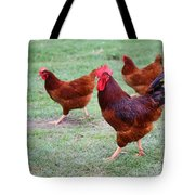 Red Rooster And Hens Tote Bag