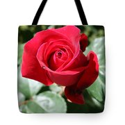 Red Rose Tote Bag