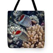 Red Sea Beauty 5 Tote Bag