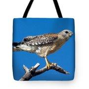 Red-shoulder Hawk Tote Bag