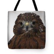 Red Shouldered Hawk Close Up Tote Bag