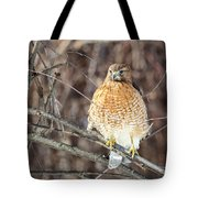 Red-shouldered Hawk Front View Square Tote Bag