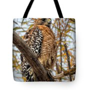 Red-shouldered Hawk In A Willow Tree Tote Bag