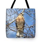 Red Shouldered Hawk In Tree Tote Bag