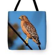 Red-shouldered Hawk On A Wire Tote Bag