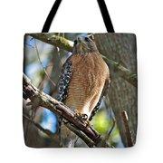 Red-shouldered Hawk On Branch Tote Bag