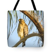 Red-shouldered Hawk On The Palm Tree Tote Bag