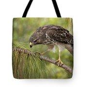 Red Shouldered Hawk Photo Tote Bag