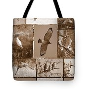 Red-shouldered Hawk Poster - Sepia Tote Bag by Carol Groenen