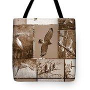 Red-shouldered Hawk Poster - Sepia Tote Bag