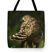 Red-shouldered Hawk Wild Texas Tote Bag
