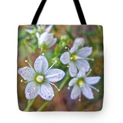 Red-spotted Saxifrage Along Horseshoe Lake Trail In Denali Np-ak  Tote Bag