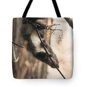 Red Squirrel - Balance Tote Bag