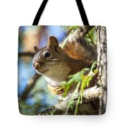 Red Squirrel In The Sun Tote Bag