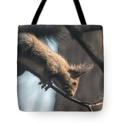 Red Squirrel Licking Dew Droplets  Tote Bag