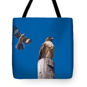 Red Tail And Friend Tote Bag