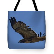 Red-tail Hawk  #7602 Tote Bag