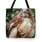 Red Tail Hawk Tote Bag