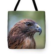 Red Tail Hawk Tote Bag by John Haldane