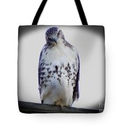 Red Tail Hawk Looking Curious Tote Bag