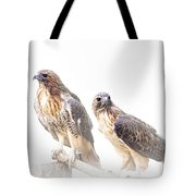 Red Tail Hawk Pair On White Background Tote Bag