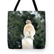 Red Tail Hawk Waiting On A Pole Tote Bag